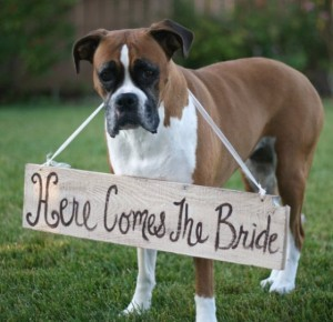 boxer-sign