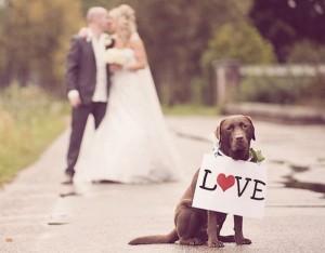 pet-in-wedding-4